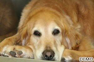 image-31_Senior Pet Care